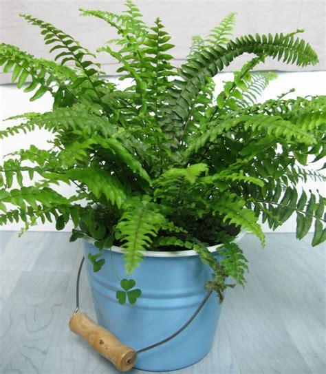 indoor house plants low light low light indoor plants my 20 favorite house plants