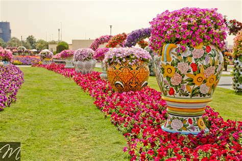 World Beautiful Flowers Garden 45 Million Flowers World S Most Beautiful Dubai Miracle Garden Wow Amazing