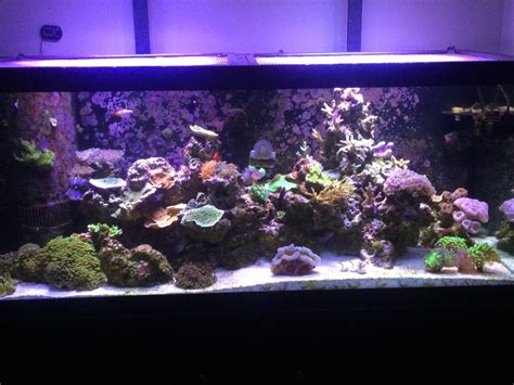 Tank Aquascape Gex 600 60x30x40 No Equip Jdubs 75 Gallon Marineland Mixed Reef Mars Aqua Leds