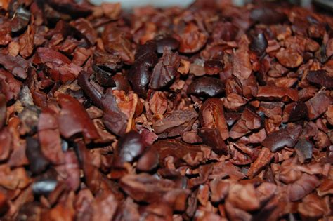 cocoa nibs i xocolātl the benefits of chocolate medivizor
