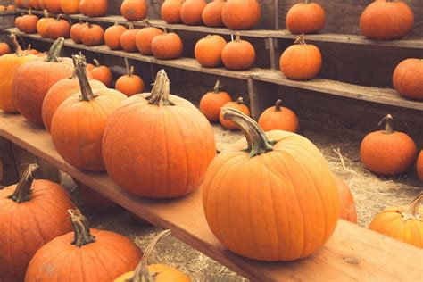 horrific halloween events in st augustine 2017 guide
