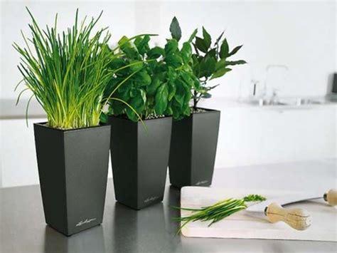Planters Indoor Modern by Black Modern Pots Indoor Kitchen Planters Placed In Indoor