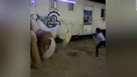 caballo cogida brutal por detras indignaci 243 n por brutal castigo de rejoneador a su caballo