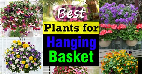 Container Gardening Guide - best plants for hanging baskets balcony garden web