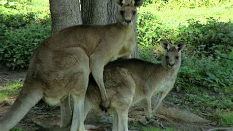 imagenes de animales apareandose animales apareandose sexo salvaje youtube