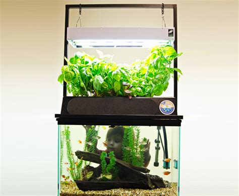 aquaponic indoor garden eco cycle aquaponics kit turns any 20 gallon aquarium into