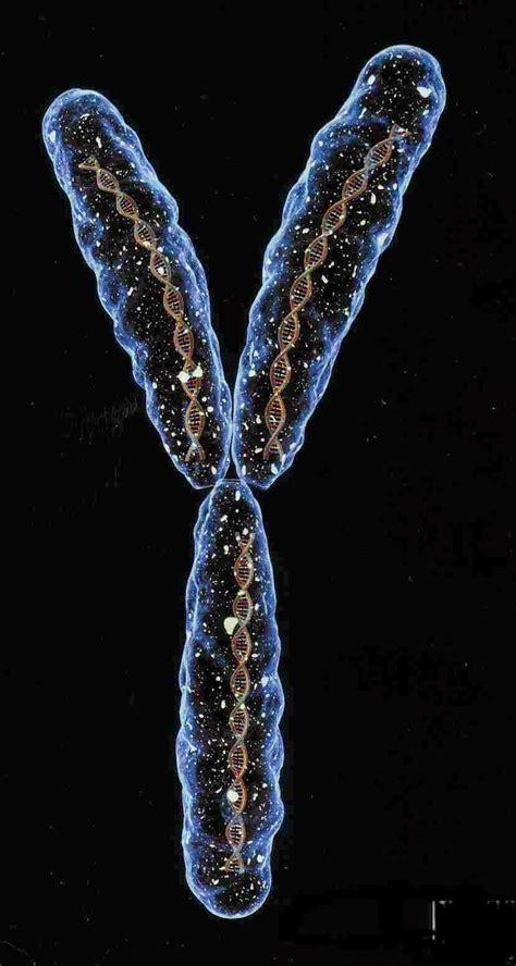 Blogos: The Tree of Life III - Qabalah is the New Black Y Chromosome