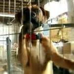 puppy mills in nc senator to constituent puppy mills bill will be blocked to supporters the