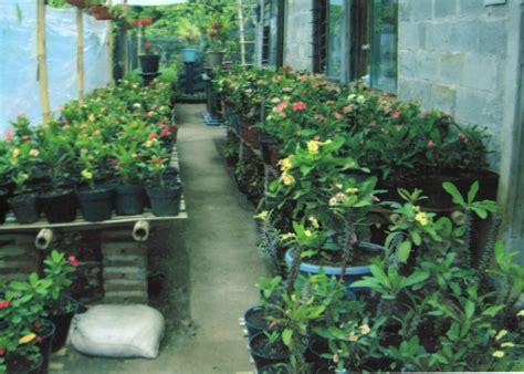 Pupuk Bunga Euphorbia media tanam untuk budidaya bunga eforbia dan khasiat