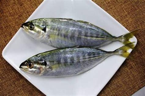 Ikan Selar 22 manfaat dan khasiat ikan selar batang untuk kesehatan