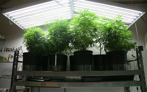 best fluorescent grow lights best t5 grow lights for growing cannabis 2018 reviews