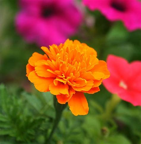 garden flower seeds 8 easy flower seeds you can sow in your garden in june to