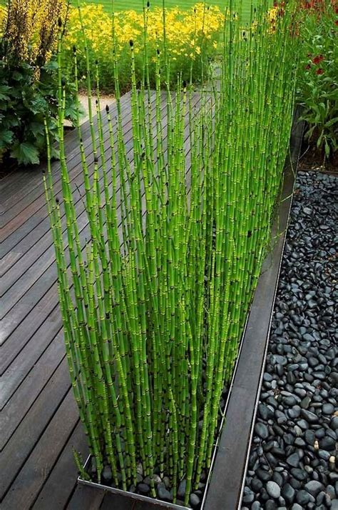 bamboo backyard bamboo garden design ideas small garden ideas