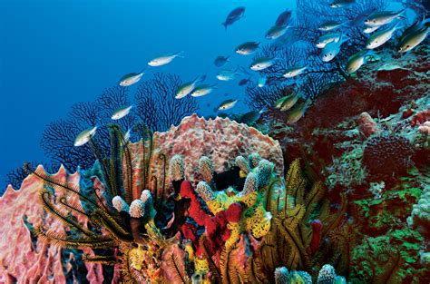 Best Diving In The Caribbean by Top 10 Caribbean Yacht Charter Destinations To Cruise This