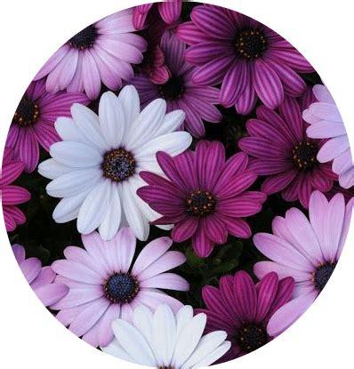 imagenes tumblr moradas tumblr flower flowers flores purple white blanco morado