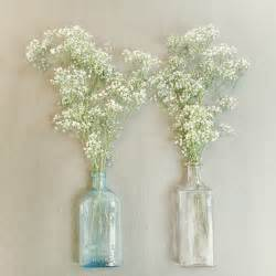 flower study baby s breath