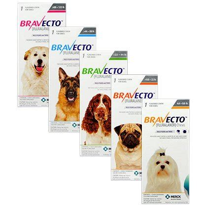 bravecto for dogs bravecto chews for dogs flea chew that lasts for 12 weeks 1800petmeds