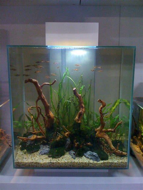 aquascape richmond subscape aquarium richmond victoria aquascape