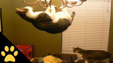 swinging cats circus cat youtube