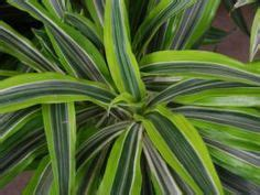 low light house plants 1000 images about hard to kill houseplants on pinterest houseplant house plants