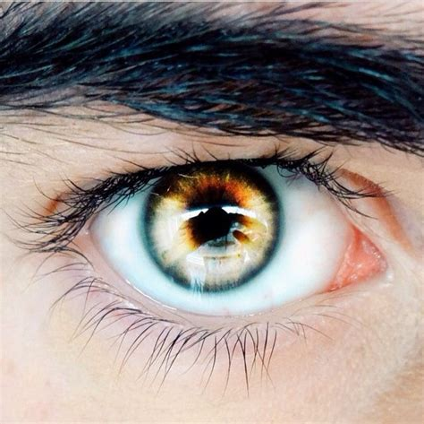 yellow eye color best 25 yellow ideas on golden