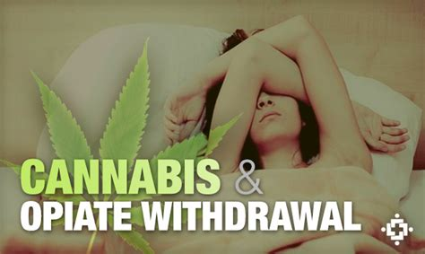 Cannabis Detox Symptoms by Cannabis Use May Reduce Opiate Withdrawal Symptoms