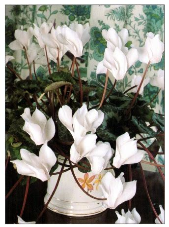 white houseplant scheme