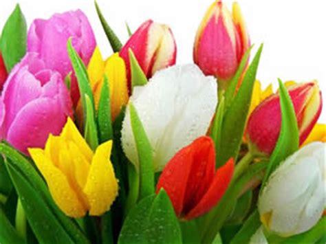 fiori da inviare inviare fiori a domicilio inviare a domicilio un mazzo di