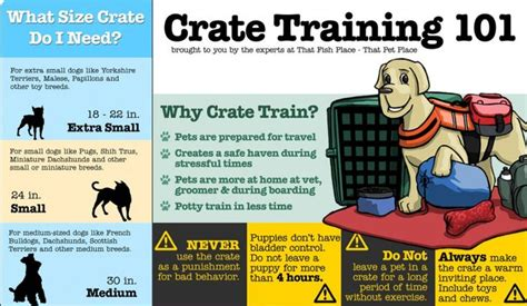how to kennel your infographic how to crate your pets fans