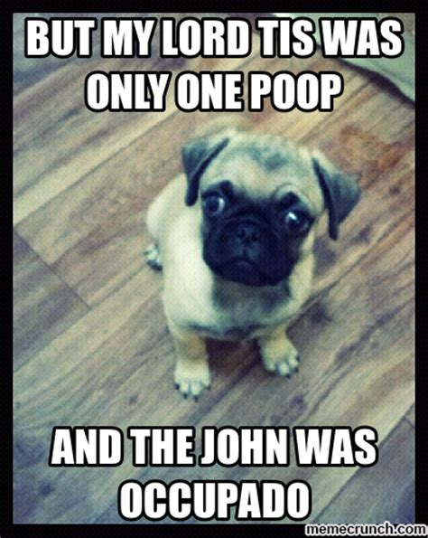 Pugs Meme - pin sad pug meme center on pinterest