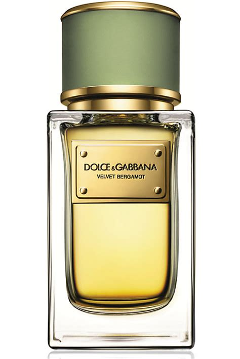 perfume for men top 10 2014 of the most popular scents velvet bergamot dolce gabbana cologne a new fragrance