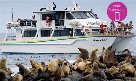 Cruise Seal The Deal With A 3 Minute by 2 Hour Seal Cruise Wildlife Coast Cruises Groupon