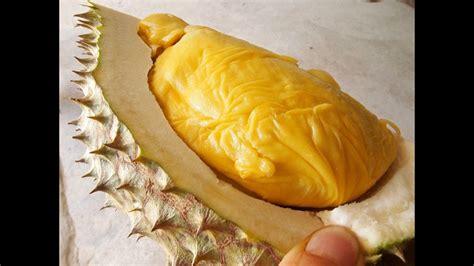 durian farms  thailand   day  thailand