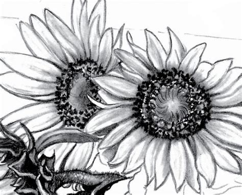 How To Draw A Vase Of Flowers Step By Step Setting Up A Still Life Sunflowers Quarto Creates