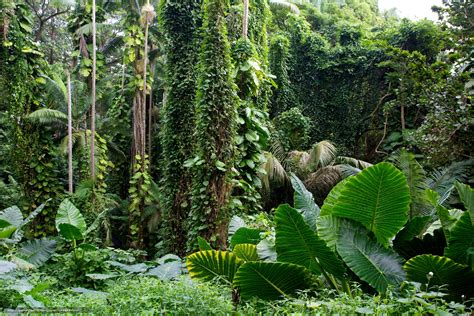 Hawaii Tropical Botanical Garden by Hawaii Tropical Botanical Garden Images