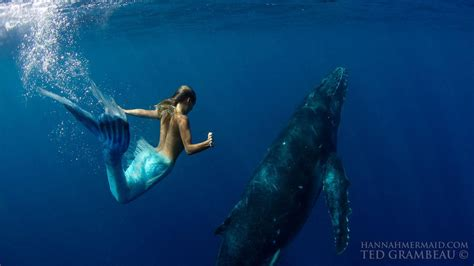 real live images of real live mermaids www imgkid the image