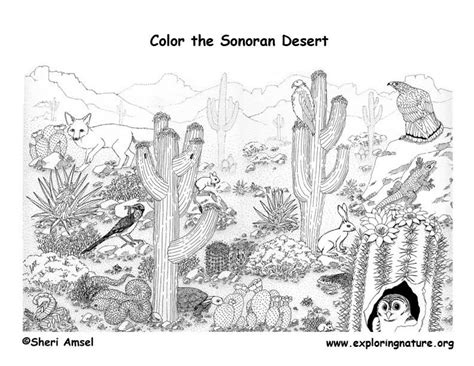 printable desert animal pictures detailed coloring pages for adults complex coloring