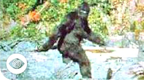 Bigfoot Search Does Bigfoot Exist