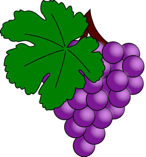uva clipart grape with vine leaf clip at clker vector clip