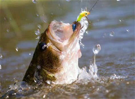 Umpan Pancing Air Tawar 5 Pilihan Umpan Mancing Ikan Air Tawar Tips Ikan
