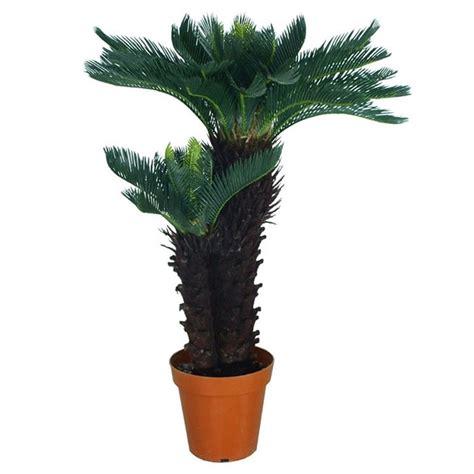 piante ornamentali da interno finte piante finte da esterno piante finte piante da esterno