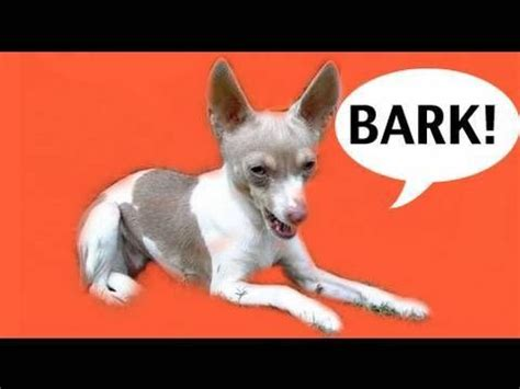 teach not to bark about how to teach your not to bark also has