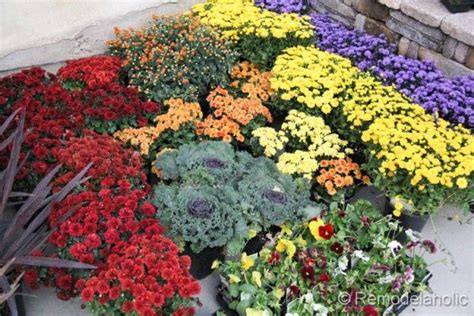 planting fall flowers what to plant now gardening