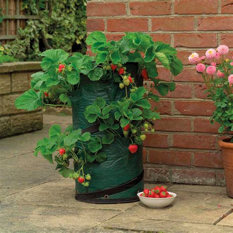pop up strawberry planter from mr fothergill s seeds and
