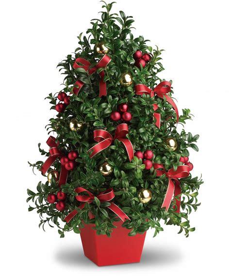boxwood christmas tree blossomflower com