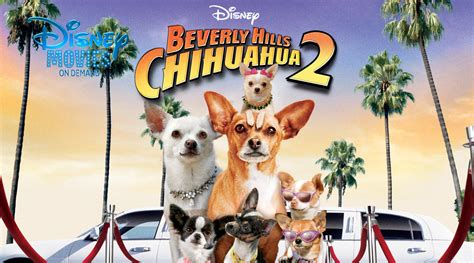 Dvd Original Beverly Chihuahua 2 beverly hill chihuahua 2 peliculacyvil