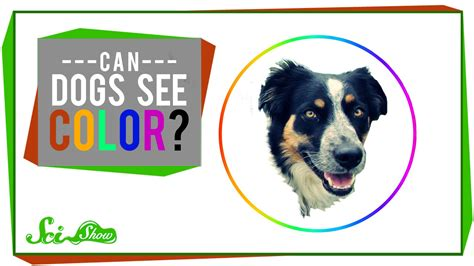 what animals are color blind why are animals color blind bubakids