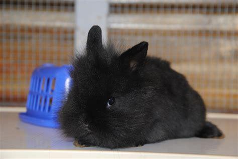 alimentazione coniglio testa di foto di cuccioli di conigli appena nati