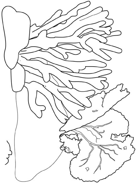 free great barrier coral reef coloring pages