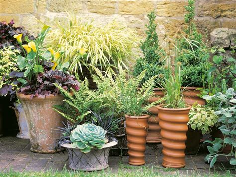 Patio Pots With Plants Plantscaping A Deck Or Patio Outdoor Spaces Patio